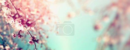 抽象春天白色的樱花树的模糊的网站横幅的背景。选择性的焦点。老式过滤